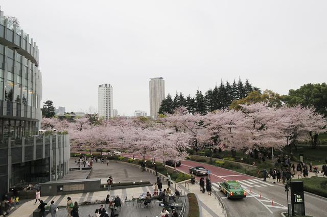 sakura midtown roppongi