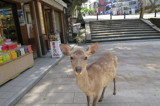 Nara Deer Souvenir
