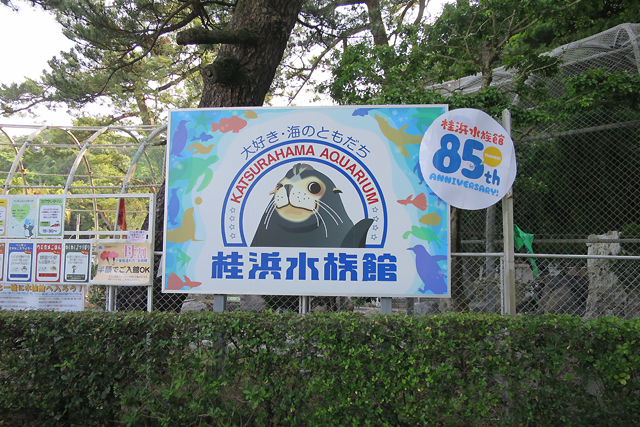 kochi - aquarium