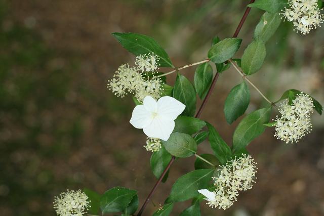 2605-bloom