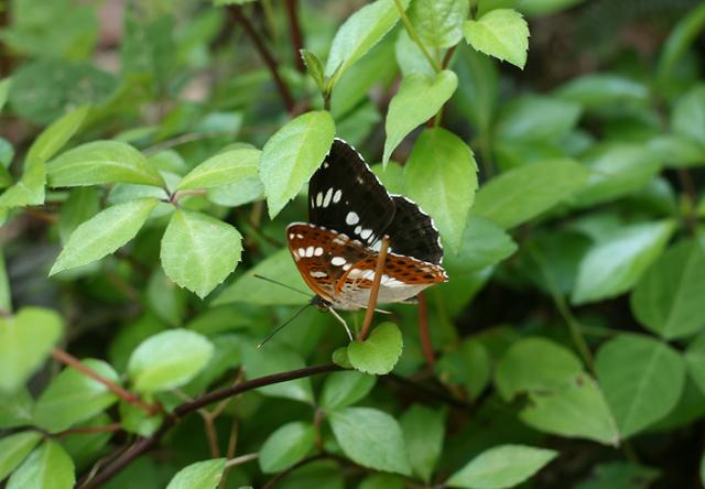 2605-butterfly