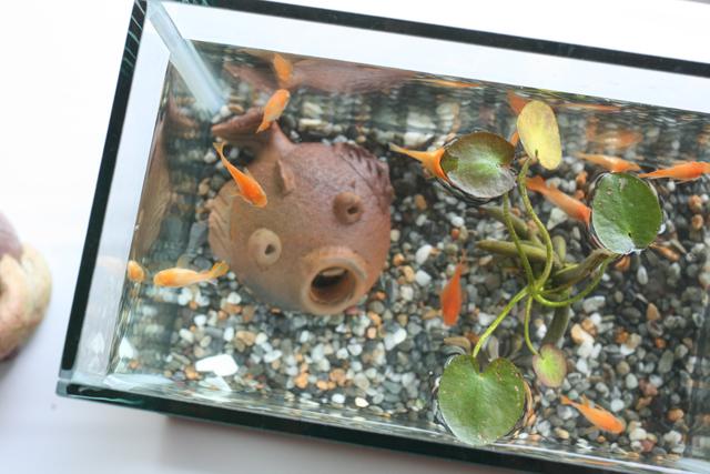 2605-fishies1