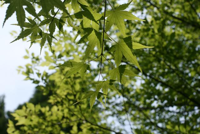 2605-leaves